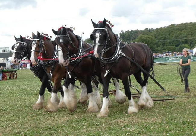 Waterers Working Horses at a show.