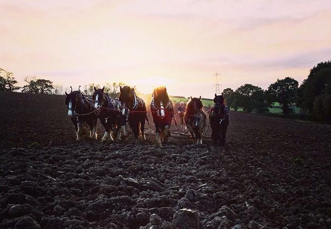Jonathon working the horses at Higher Biddacott Farm.