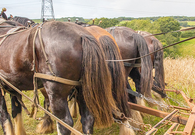 Horses taking a rest during training at Higher Biddacott Farm.