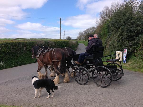 Enjoy a driving course at Higher Biddacott Farm.