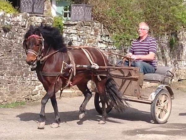 Here at Higher Biddacott Farm we train all types of horses and ponies.