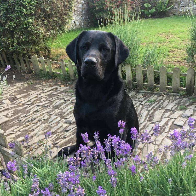 Meet Ralph, he lives at Higher Biddacott Farm Bed and Breakfast in Devon.