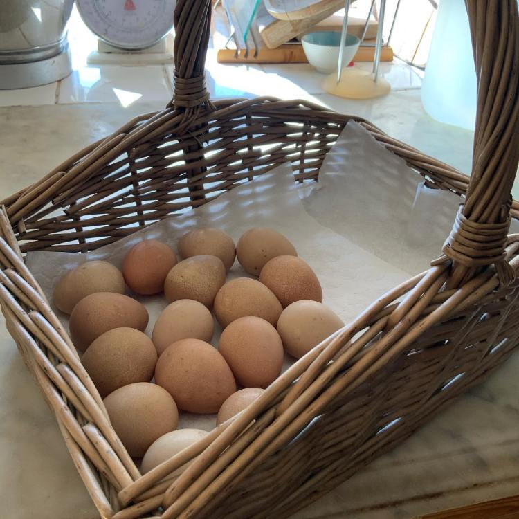 Delicious eggs can be enjoyed by guests at Higher Biddacott Farm bed and breakfast, North Devon.